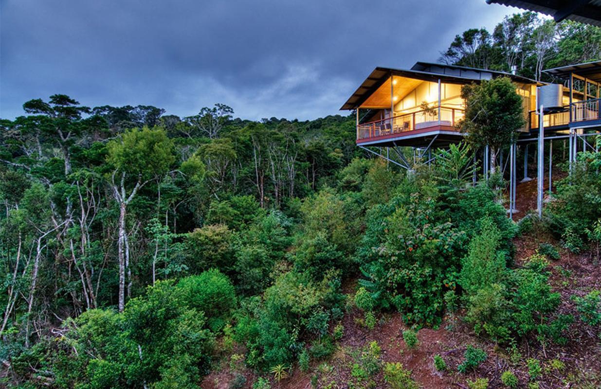 O'Reilly's Rainforest Retreat Image 1